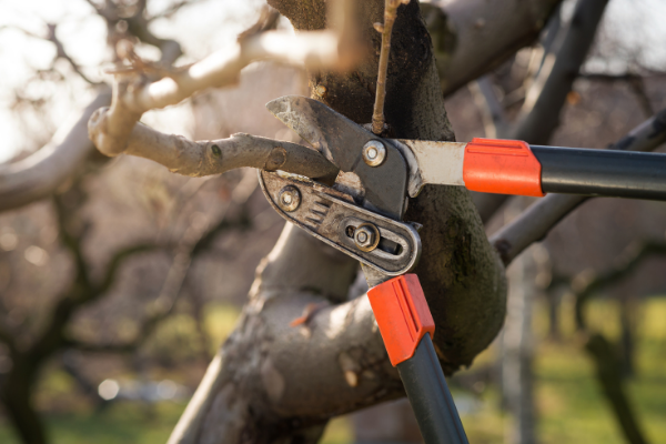 Arbworks Tree Pruning Tree Surgeons