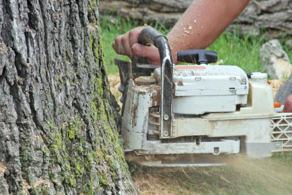 Tree felling Tree surgeons Bolton Arbworks