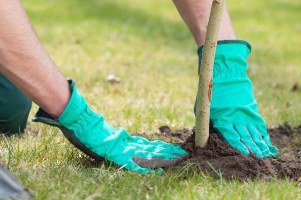 Tree Planting Bolton Arbworks
