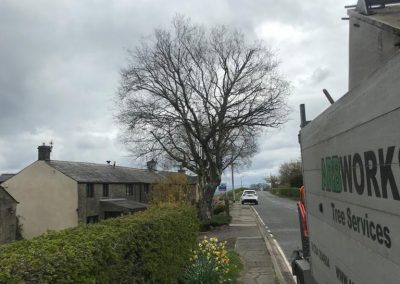 Arbworks Tree Surgeons Bolton Projects