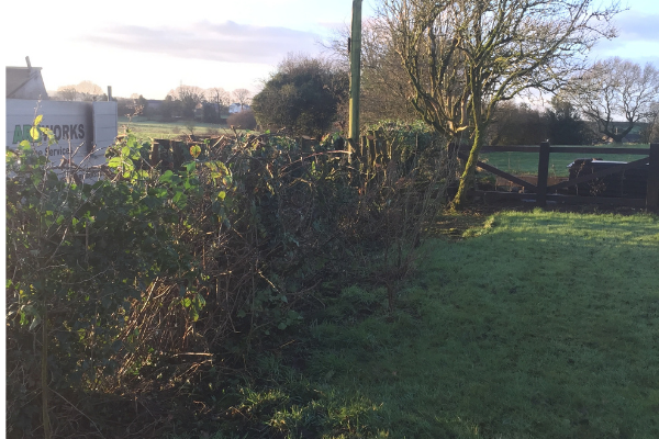 Hedge Trimming Bolton Arb works
